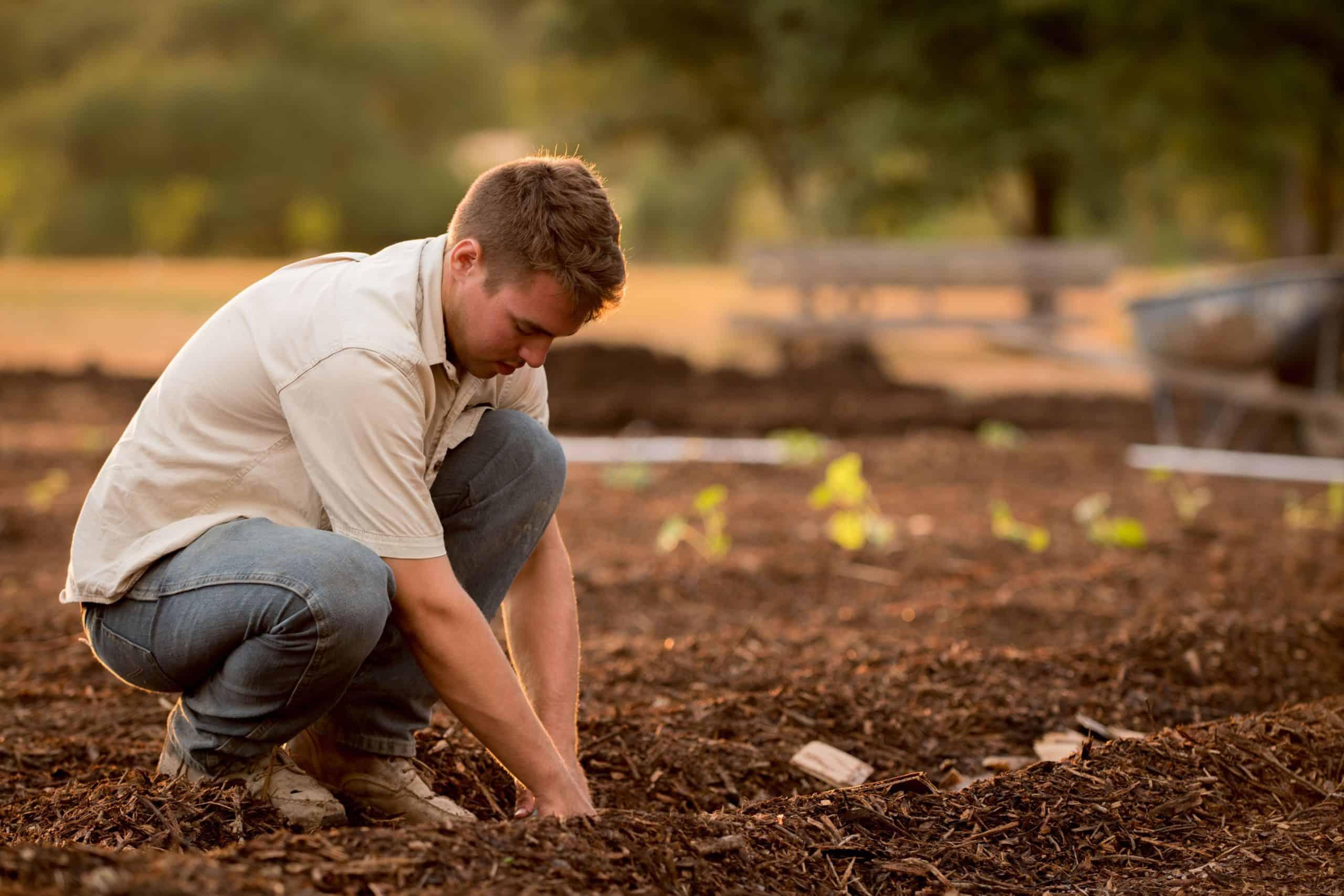 jardinier plante terreau